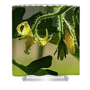 Your Next Tomatoes Shower Curtain