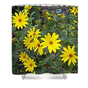 Youre A Daisy If You Do Shower Curtain