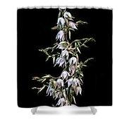 Yucca Art Shower Curtain