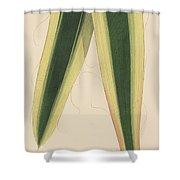 Yucca Leaf Shower Curtain