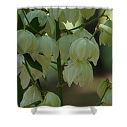 Yucca Plant Shower Curtain