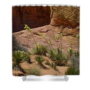 Yucca Plants Valley Of Fire Shower Curtain