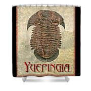 Yuepingia Fossil Trilobite Shower Curtain