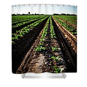 Yuma Lettuce Shower Curtain