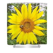 Yummy Sunflower Shower Curtain