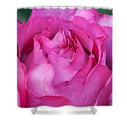 Yves Piaget Rose Shower Curtain