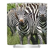 z2 Shower Curtain