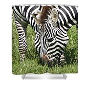 z2a Shower Curtain