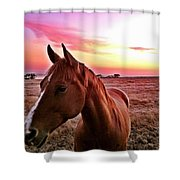 Zack During Sunset Shower Curtain