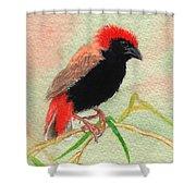 Zanzibar Red Bishop Shower Curtain