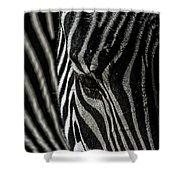 Zebra 3 Shower Curtain