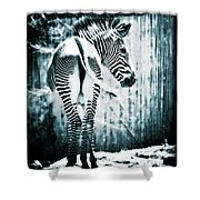 Zebra Blues  Shower Curtain