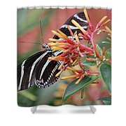 Zebra Butterfly With Blue Eyes Shower Curtain