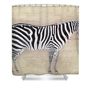 Zebra, C1620 Shower Curtain