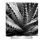 Zebra Cactus Bw Shower Curtain