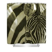 Zebra Close Up A Shower Curtain