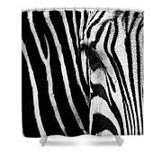 Eye Of The Zebra Shower Curtain