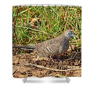 Zebra Dove Shower Curtain