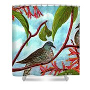 Zebra Doves Or Barred Dove Birds #309 Shower Curtain