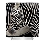 Zebra Head Shower Curtain by Carlos Caetano