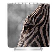 Zebra I Shower Curtain
