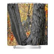 Zebra In Mopane Textures Shower Curtain
