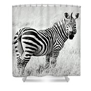 Zebra In The African Savanna Shower Curtain