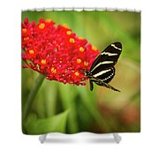 Zebra Long Wing Butterfly Shower Curtain