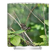Zebra Longwing Butterfly About To Take Flight Shower Curtain