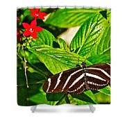Zebra Longwing Butterfly In Living Desert Zoo And Gardens In Palm Desert-california  Shower Curtain
