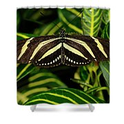 Zebra Longwing Butterfly On A Sanchezia Nobilis Tropical Plant Shower Curtain