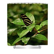 Zebra Longwing Butterfly Shower Curtain