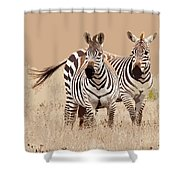 Zebra Pair Shower Curtain