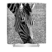 Zebra Portrait Shower Curtain