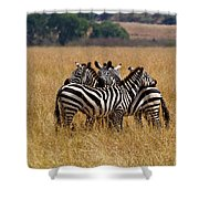 Zebra Protect Each Other Shower Curtain