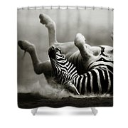 Zebra Rolling Shower Curtain