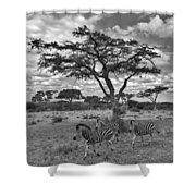 Zebra Running Through Savannah Shower Curtain