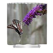 Zebra Swallowtail Butterfly 2 Shower Curtain
