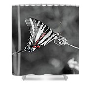 Zebra Swallowtail Butterfly 2016 Shower Curtain