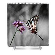 Zebra Swallowtail Butterfly And Stripes Shower Curtain