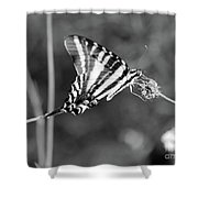 Zebra Swallowtail Butterfly Black And White Shower Curtain