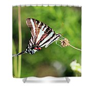 Zebra Swallowtail Butterfly In Garden 2016 Shower Curtain