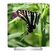 Zebra Swallowtail Butterfly In Green Shower Curtain