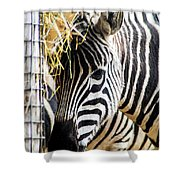 Zebra Zee Shower Curtain