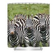 Zebra10 Shower Curtain