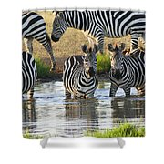 Zebra15 Shower Curtain