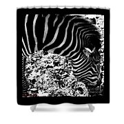 Zebra2 Shower Curtain