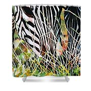 Zebras In The Grass Shower Curtain