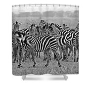 Zebras On The March Shower Curtain