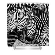 Zebras Triplets Shower Curtain